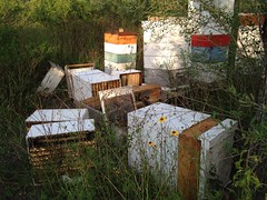 Bee boxes down!