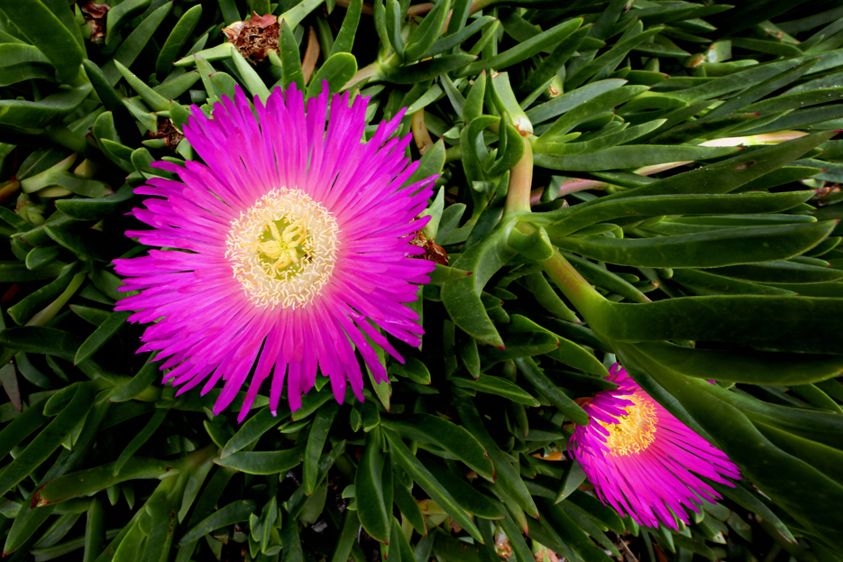 052212_flower01