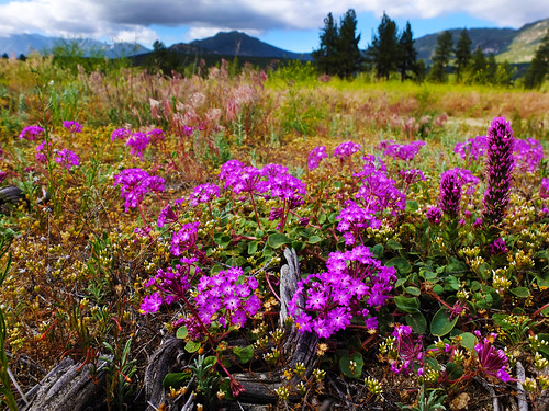 flowers camping trees sky nature forest fence outdoors scenery open hiking space meadow pines hemet moutain