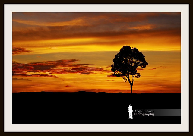 Sunset Tree (Explore ~ June 4, 2012)
