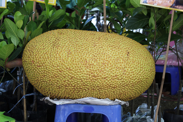 Perfect jackfruits