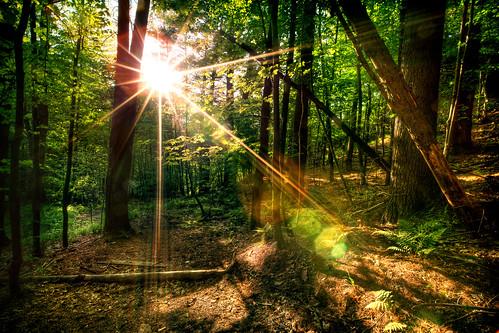 wood trees light sunset sun sunlight tree green broken leaves set forest blog leaf woods ray hiking mark iii hike website 5d rays hdr mk mkiii mk3
