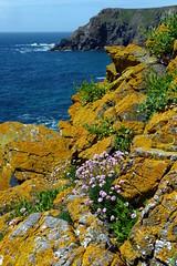 Asparagus Island