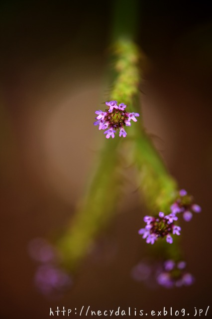 small flowers...