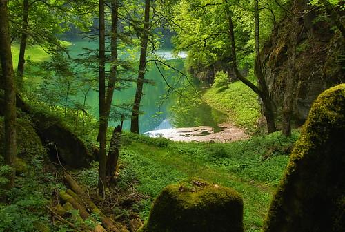 trees light lake tree green nature landscape photography schweiz switzerland photo spring nikon swiss mount d90 ceca