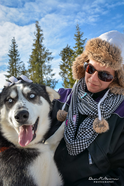 A Day of Husky Dog Sledding - Husky