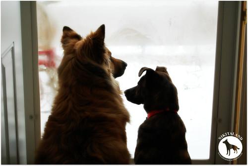 Nikita and Bella at the front door