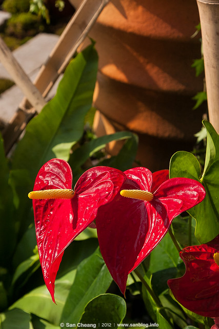 澳門綠化週2012