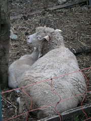 Tierische Mutterliebe