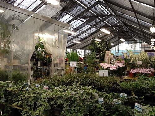 観葉植物が豊富な『神楽フラワーセンター』@大和高田市