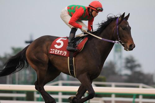 コスモオオゾラ 返し馬
