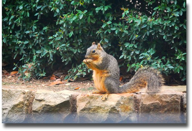 squirrel having lunch