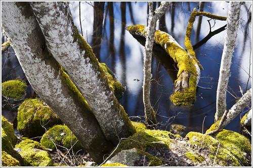 20120418. Kurtna auk. 6709. by Tiina Gill