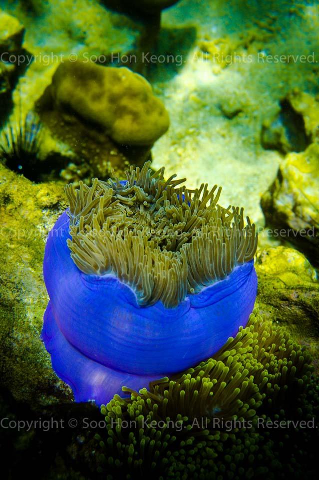UnderWater @ Lipe Island, Thailand