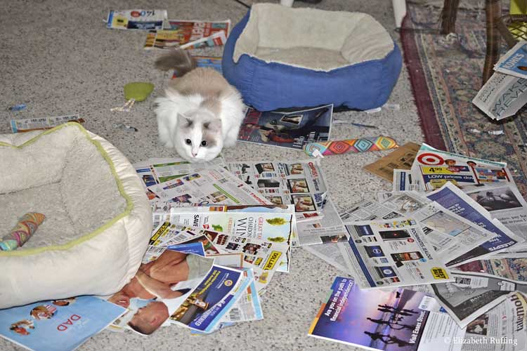 Silly cat playing in newspapers, photo by Elizabeth Ruffing