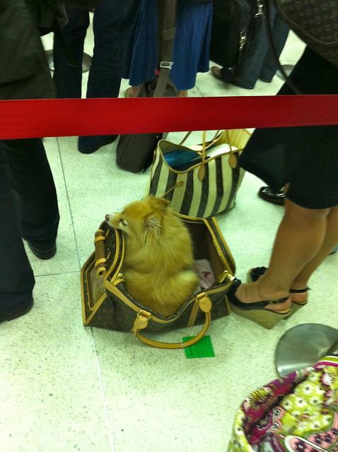Perro como equipaje de mano.