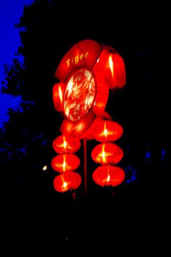 Tiger Chinese Lantern