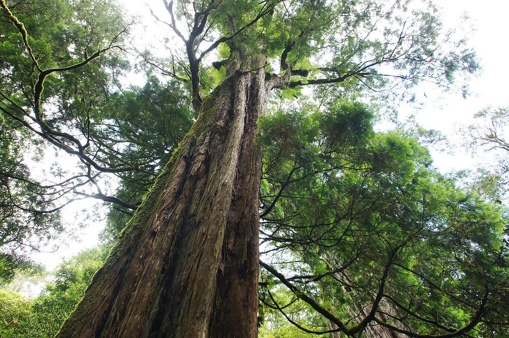 巨木群,與往拉拉山的路上-024