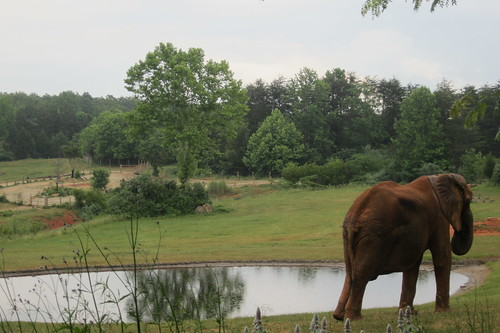picture perfect pachyderm