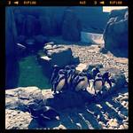 20120513 calgary zoo - 1