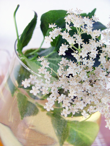 Elderflower - Sambuco - Hollunder Cordial