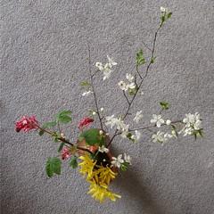 Trois branches carée du jardin by Julie70