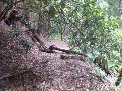 Alaculsey Gap Trail