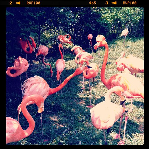Flamingos. I always think of three' company when I see these. Random I know.
