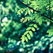 Light Green Bluish Leaves & Bokeh by Orbmiser