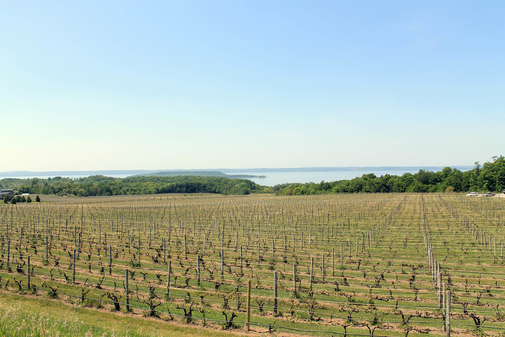 Chateau Grand Traverse Winery/Vineyards - Wading in Big Shoes
