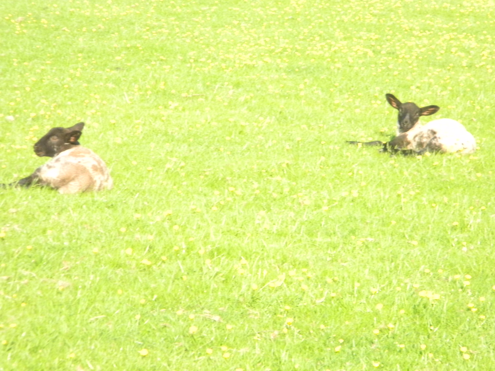 Lambs Moreton-in-Marsh Circular