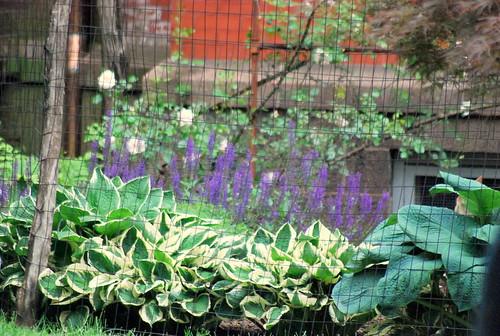 back yard garden