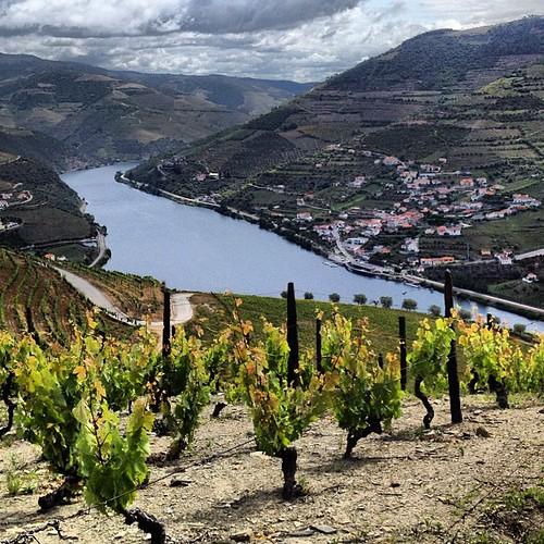 quinta dos murcas duoro vineyard