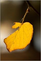 20120602-120602_Emmarentia_6