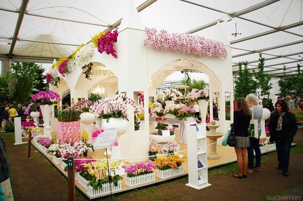 aliciasivert, alicia sivertsson, london, england, chelsea flower show 2011, flower, flowers, nature, blossom, bloom, garden, trädgård, trädgårdsmässa, blommor, blomster, växtlighet, natur