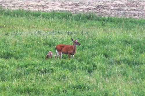 deer_mama_baby
