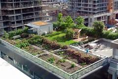 Rooftop Garden June 9