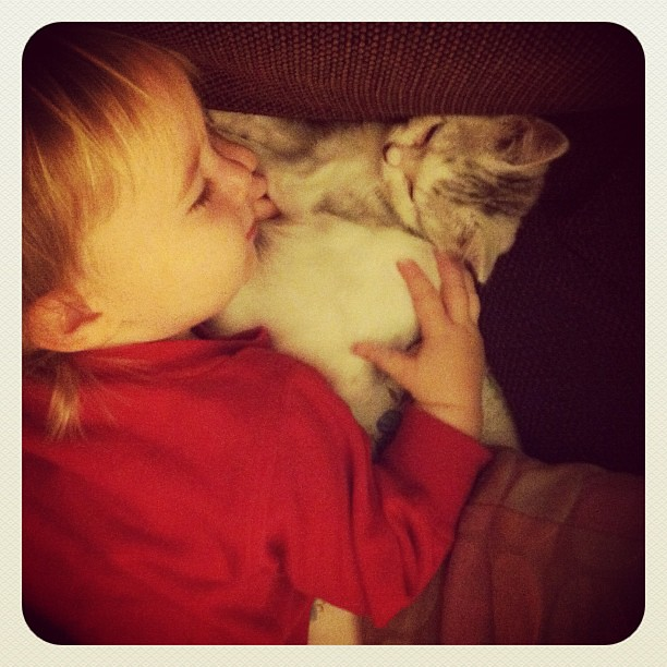 Pals #kittens #toddler #melt #toocute #love