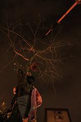 0425遠雄大巨蛋 強砍老樹 吊車拔樹 潘漢疆以身護樹