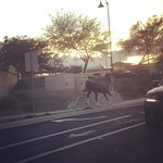 Run away horse - only in queen creek. by bartlewife