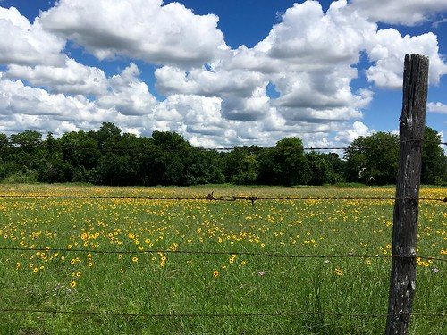 clouds landscape texas wildflowers texaslandscape