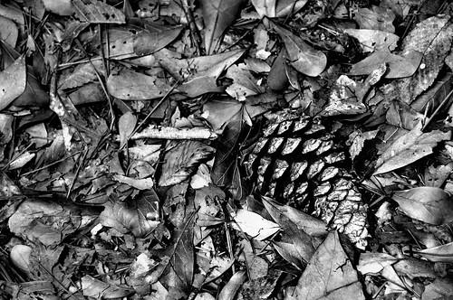 Nature Abstract Black & White Frame I