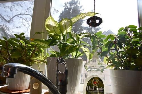 happy green kitchen