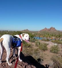 Hiking Buddy (2)