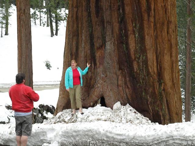 Sequoia National Park 111