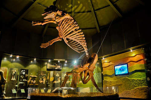 Museo de Paleontología (15)