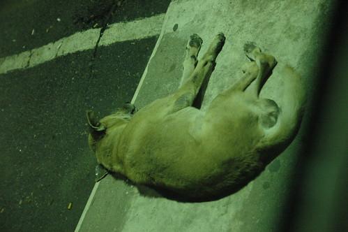 タイの野良犬、初遭遇