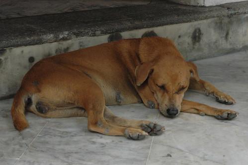 寺の中にも犬