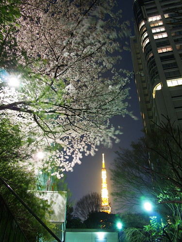 桜 2012 愛宕神社 - 夜桜