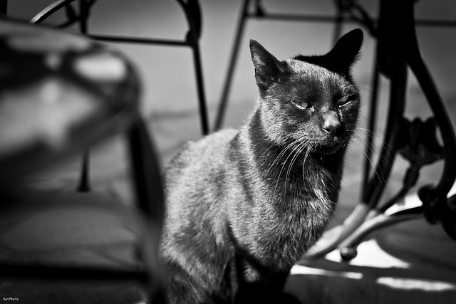 Desfile felino - 1